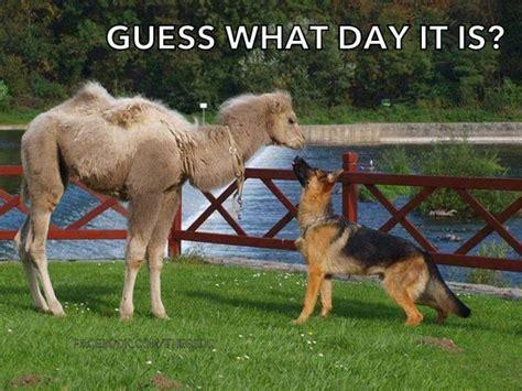 german shepherd cute  funny sayings images