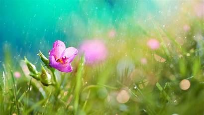Rain Nature Flowers Pink Macro Background Desktop