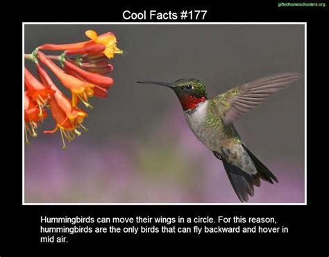 17 best images about cool facts on pinterest
