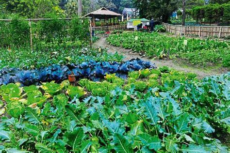 Organic Kitchen Garden Definition by Sikkim Against The Machine Livemint