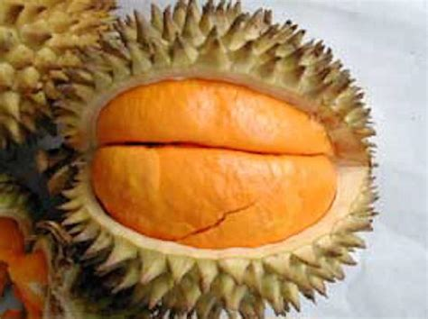 bentuk  kulitnya persis durian tapi bukan durian patut