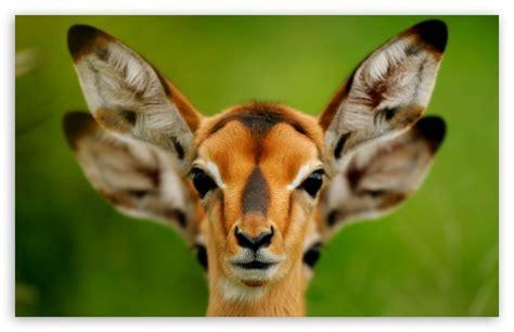 Wild Animals 4k Hd Desktop Wallpaper For 4k Ultra Hd Tv