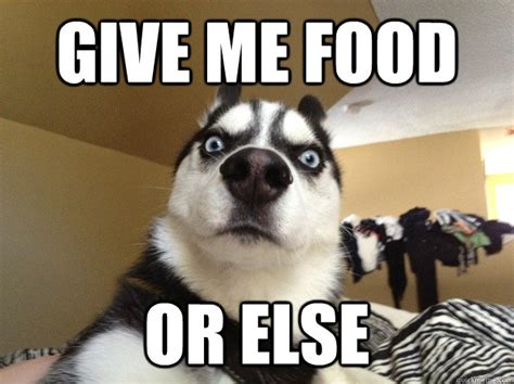 Funny Hungry Meme - image gallery hungry dog meme
