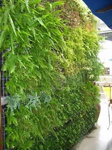 Mur Végétal Extérieur : affordable mur vgtal constitu de cages mtalliques with mur ~ Premium-room.com Idées de Décoration