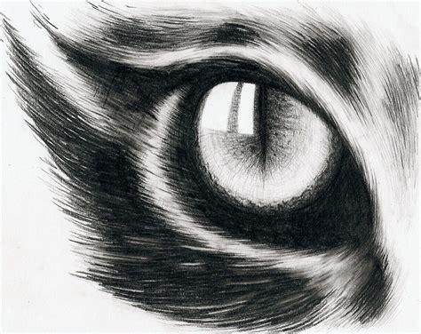 eye   cat  hitforsa  deviantart