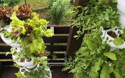 Hydroponic Herbs Vegetables Tower Balcony Planter Gardening