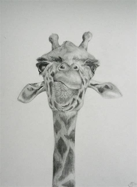 Giraffe Drawing On Behance