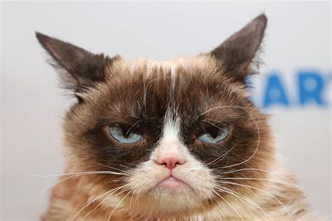 Man Knows Not His Time Grumpy Cat Dead At Seven