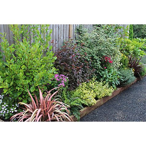 evergreen shrubs for borders evergreen border collection 3m x 90cm