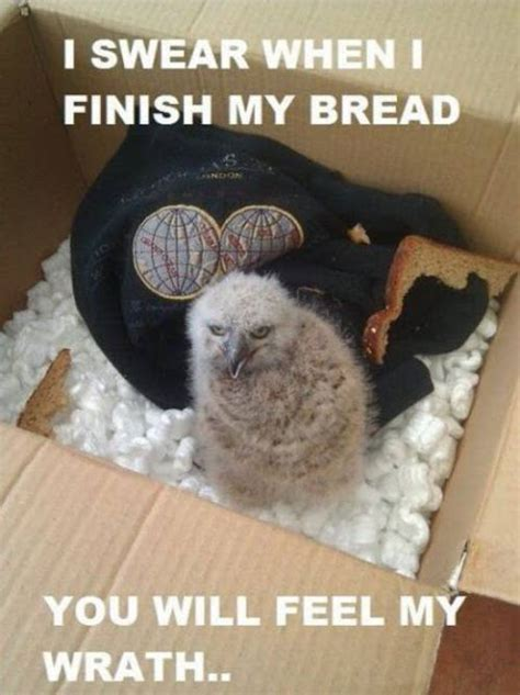 animal pictures  hilarious animal pictures