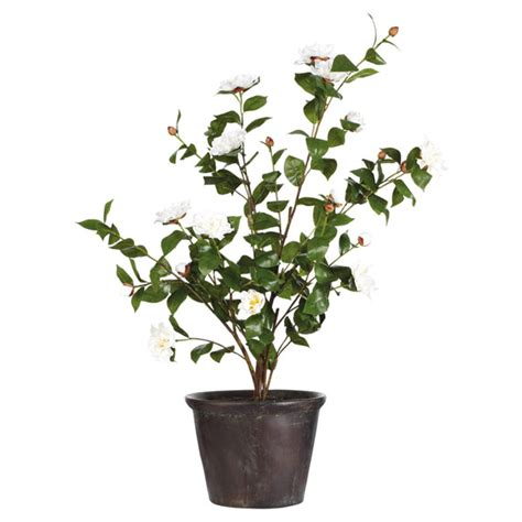 potted faux camellia large oka
