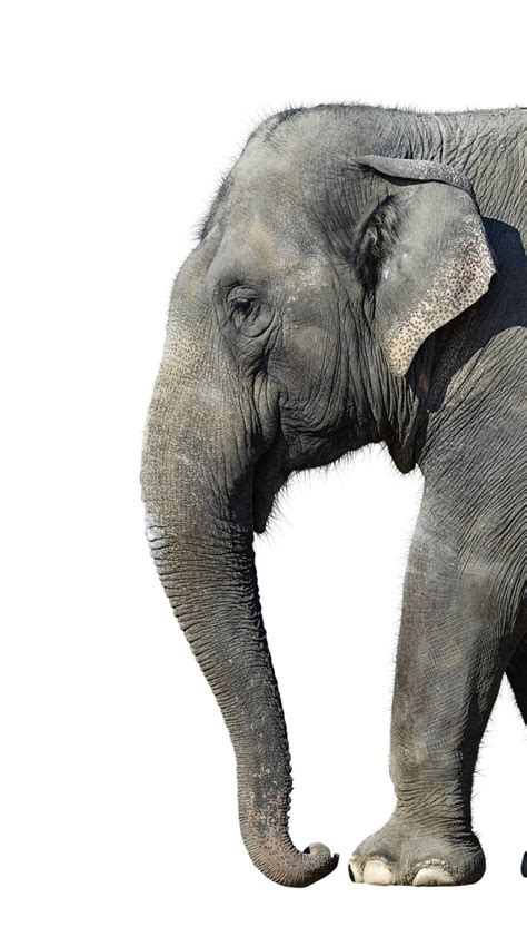 elephant iphone wallpaper gallery