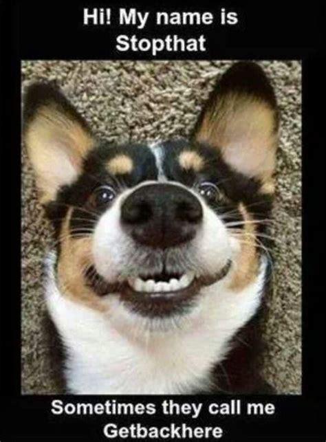 hilarious animal memes funoramic