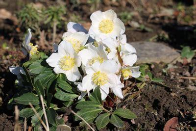 Winterpflanzen Für Balkon by Winterharte Pflanzen F 252 R Balkon Und Garten Gartendialog De