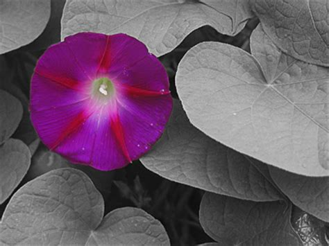 a touch of color black white with a touch of color