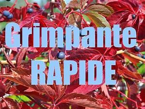 Arbre Ombre Croissance Rapide : plante grimpante rapide jolie et simple sans entretien ~ Premium-room.com Idées de Décoration