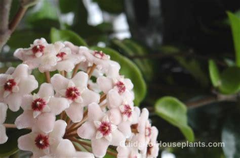 Fragrant House Plants