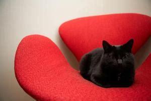 comment faire briller un canapé en cuir comment faire pour éloigner les chats d 39 un canapé en cuir