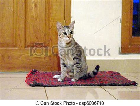 scaredy cat scaredy cat sitting on the doormat cat sitting on a mat in a home