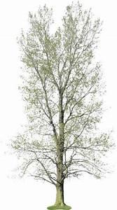 Baum Fällen Kosten Forum : baum fr hling schmal staffageobjekte archinoah ~ Jslefanu.com Haus und Dekorationen