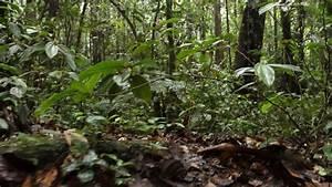 Plants With Ridged Leaves On The Rainforest Floor  Ecuador