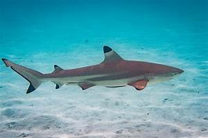 Could Climate Change Be Behind Fewer Shark Attacks Worldwide
