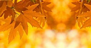Wallpapers For > Fall Leaves Desktop Background Hd #8232
