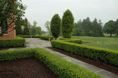 hedge ideas for landscaping formal bluestone terrace with boxwood hedge traditional landscape detroit by land