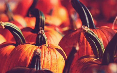 Desktop Fall Backgrounds Pumpkins by Fall Pumpkin Wallpaper For Desktop 57 Images