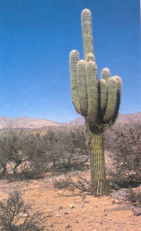pictures of cactuses cactus world travel bloguez com
