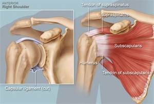 Rotator Cuff  Shouldering The Burden