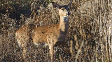 Pennsylvania Game Commission Expands Chronic Wasting