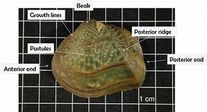 Help  The Joseph Britton Freshwater Mussel Collection User