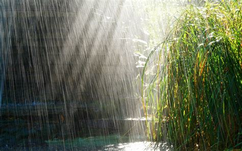 Rainy Background Rainy Day Backgrounds Wallpaper Cave