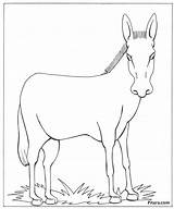 Donkey Animals Domestic Coloring Pages Drawing Global Pet Warming Shrek Animal Pitara Colouring Getdrawings Craft Paintingvalley Drawings Tail sketch template