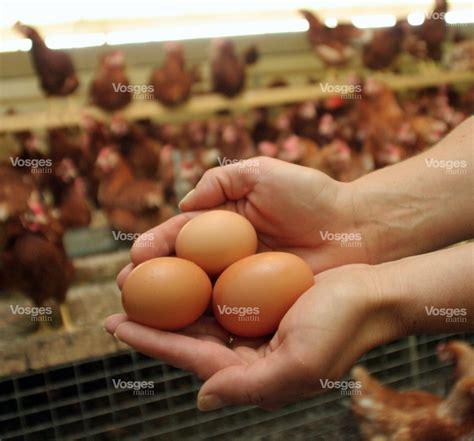 fait du jour un casse tête d œuf