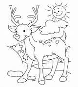 Coloring Deer Mewarnai Rusa Gambar Reindeer Printable Diwarnai Cartoon Drawing Hunting Buck Hutan Pemandangan Antlers Ones Hirsch Reh Chevreuil Fallow sketch template