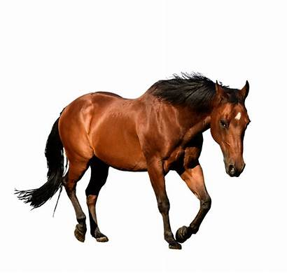 Horse Bay Animal Isolation Cutout Pixel Equestrian