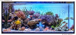 Acquario marino allestimento reef aquarium