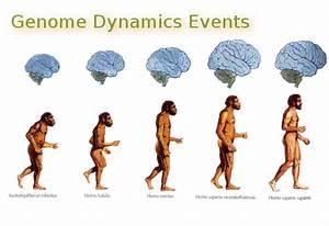 Image Gallery evolutionary adaptation