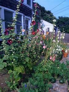 Cottage Gardens New England