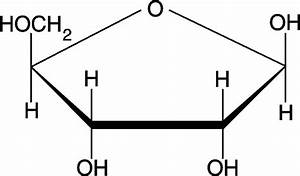 How Are Deoxyribose And Ribose Different