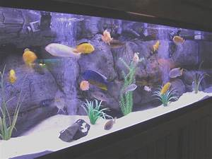 Seven Facts About Freshwater Tropical Fish Tank That Will