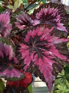 Indoor Plants Low Light | HGTV