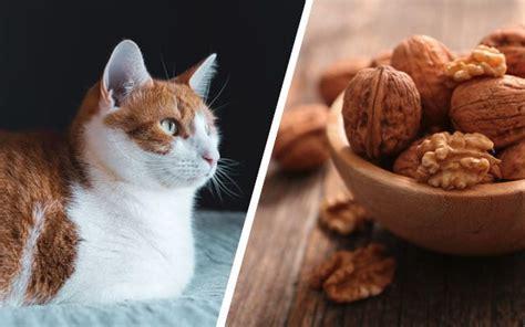 do cats like pistachio ice cream