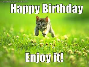 birthday cat meme cat meme birthday happybirthdaymeme