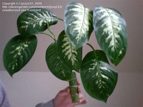 plant identification common houseplant 1 by lynzy143