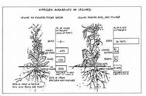 A Great Organic Fertilizer For Your Edible Landscape