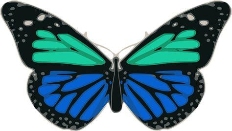 foto de Mariposa Azul Turquesa · Gráficos vectoriales gratis en