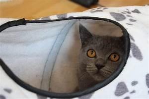 Was Brauchen Katzen : bkh ausstattung grundausstattung von britisch kurzhaar ~ Lizthompson.info Haus und Dekorationen